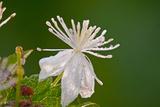 Flower Photographic Print by Gordon Semmens
