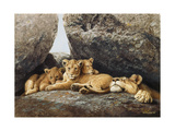 Lioness with Cubs Giclee Print by Harro Maass