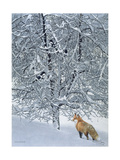 Fox in Snow Lámina giclée por Harro Maass