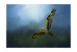 Osprey in the Evening Light Reproduction procédé giclée par Jai Johnson