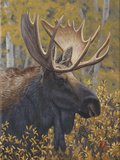 Moose Portrait Photographic Print by Jeffrey Hoff