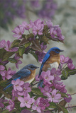 Bluebirds and Spring Blossoms Photographic Print by Jeffrey Hoff