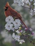 Cardinal Spring Blossoms Photographic Print by Jeffrey Hoff