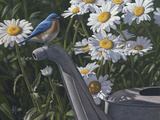 Bluebird Daisies Photographic Print by Jeffrey Hoff