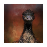 Emu Stare Reproduction procédé giclée par Jai Johnson