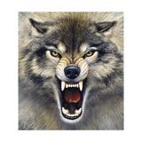 Wolf Giclée-Druck von Harro Maass