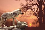Sunset Ridge Fotografie-Druck von Gordon Semmens