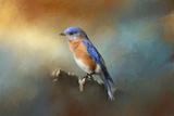 Bluebird on the Fence Lámina giclée por Jai Johnson
