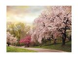 Asian Cherry Grove Giclée-Druck von Jessica Jenney