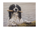 Border Collie with Stick in Lake Giclee Print by John Silver