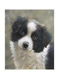 Border Collie Giclee Print by John Silver