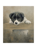 Border Collie Puppy on a Fence Giclee Print by John Silver