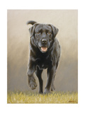 Labrador Giclee Print by John Silver