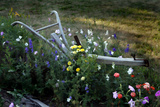 Flower Plow Photographic Print by J.D. Mcfarlan