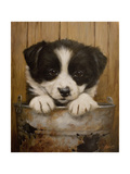 Puppy in a Bucket Giclee Print by John Silver