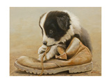 Border Collie Puppy Eating a Boot Giclee Print by John Silver