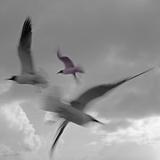Libertad - Pop Reproduction photographique par Moises Levy