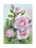 Morning Roses Reproduction procédé giclée par Olga And Alexey Drozdov