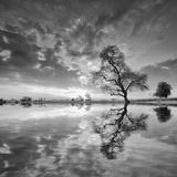 Arbol en Agua 5 BN Reproduction photographique par Moises Levy