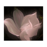 Magnolia Giclee Print by Mindy Sommers
