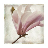 Petal Purity I Giclee Print by Mindy Sommers