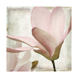 Petal Purity II Giclee Print by Mindy Sommers