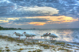 Ibis at Sunrise Reproduction photographique par Robert Goldwitz
