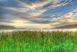 Cattails and Sky Valokuvavedos tekijänä Robert Goldwitz
