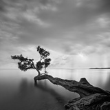 L'arbre et l'eau Reproduction photographique par Moises Levy