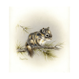 Tattle-Tail Baby Giclee Print by Peggy Harris