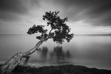 Water Tree 11 BW Fotografisk trykk av Moises Levy
