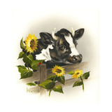 Bull and Sunflowers Giclee Print by Peggy Harris