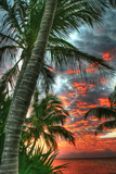 Key West Palm Sunrise Vertical Photographic Print by Robert Goldwitz