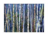 Mystery of Trees-Birches Reproduction procédé giclée par Sharon Pitts