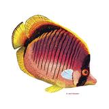 New Fish 1 Reproduction procédé giclée par Olga And Alexey Drozdov
