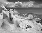 Icy Studs Giclee Print by Thomas Barbey