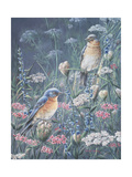 Bluebird and Wildflowers Reproduction procédé giclée par Wanda Mumm