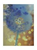 Wishful Thinking II Lámina giclée por Tina Lavoie