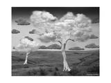 Natural Disorder Giclee-trykk av Thomas Barbey