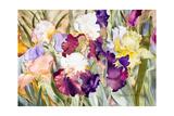 Iris Garden I Stampa giclée di Sharon Pitts