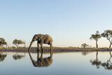 Botswana, Chobe NP, African Elephant at Water Hole in Savuti Marsh Fotografisk tryk af Paul Souders