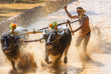 Kambala, Traditional Buffalo Racing, Kerala, India Impressão fotográfica por Peter Adams