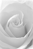 Black and White Rose Abstract Fotoprint van Anna Miller