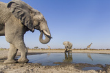 Botswana, Chobe National Park, Elephants and Giraffes at a Water Hole Fotoprint av Paul Souders