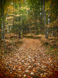 USA, Michigan, Upper Peninsula. Leaf Lined Trail in the Hiawatha NF Fotografisk tryk af Julie Eggers