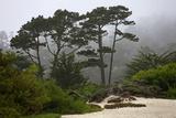California, Carmel by the Sea. Coastal Trees of Carmel by the Sea Reproduction photographique par Kymri Wilt