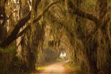 Georgia, Savannah, Savannah NWR, Moss Draped Oaks Along Drive Reproduction photographique par Joanne Wells