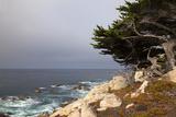 USA, California, Monterey. 17-Mile Drive Coast Near Ghost Tree Reproduction photographique par Kymri Wilt