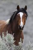 Wild Horses, Steens Mountains Fotografie-Druck von Ken Archer