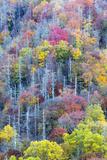 Tennessee, Great Smoky Mountains NP, View Along Newfound Gap Road Fotografisk trykk av Jamie & Judy Wild